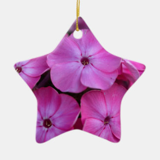 Garden phlox  (Phlox paniculata) Ceramic Ornament
