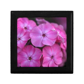 Garden phlox  (Phlox paniculata) Gift Box