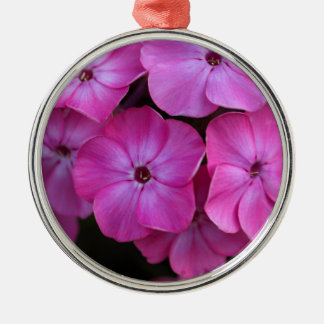 Garden phlox  (Phlox paniculata) Metal Ornament