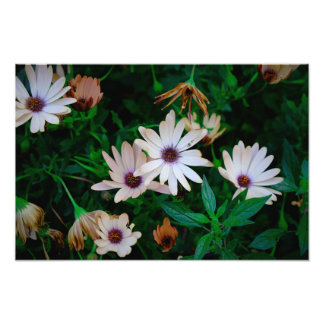 Garden Photographic Print