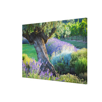 Garden scenic with flowers, France Canvas Print