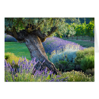 Garden scenic with flowers, France Card