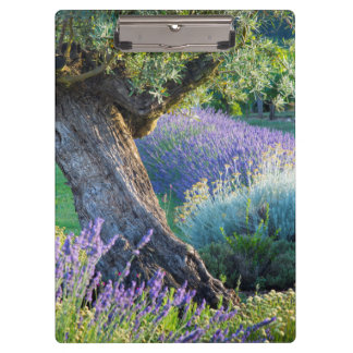 Garden scenic with flowers, France Clipboards