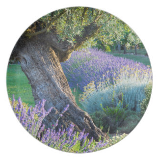 Garden scenic with flowers, France Plate