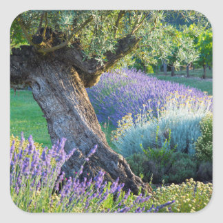 Garden scenic with flowers, France Square Sticker