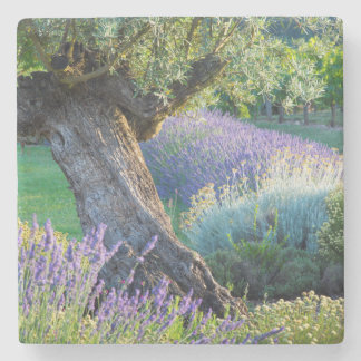 Garden scenic with flowers, France Stone Beverage Coaster
