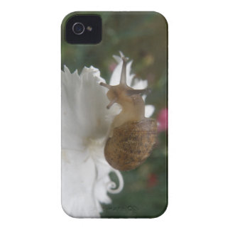 Garden Snail and White Carnation Blackberry Curve  iPhone 4 Case-Mate Case