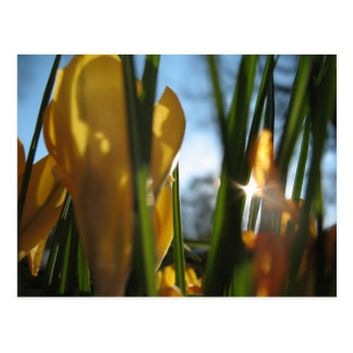 """Garden Sunset"" Greeting Card"