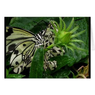 garden variety rodeo clown ~ 2009 butterfly series card