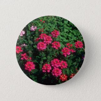 Garden Verbena (Verbena Hybrida) flowers 2 Inch Round Button