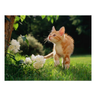 Garden Walk Tabby Cat Print