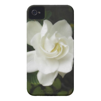 Gardenia blackberry Bold Case