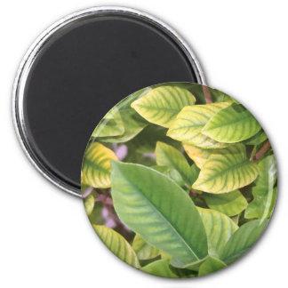 Gardenia Greenery 2 Inch Round Magnet