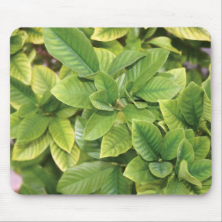 Gardenia Greens Mouse Pad