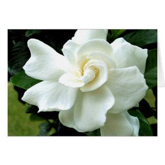 Gardenia Note Card