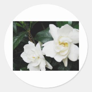 Gardenias Classic Round Sticker