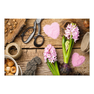Gardening Background with Flower and Bulbs on Wood Photo Print