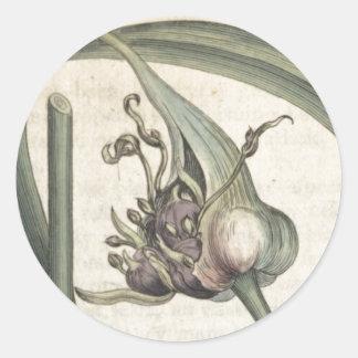 Garlic Classic Round Sticker