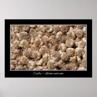 Garlic in French market poster