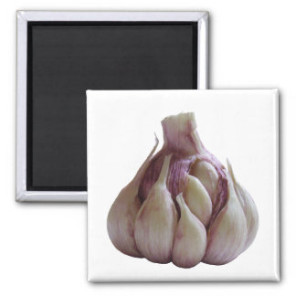 Garlic kitchen magnet
