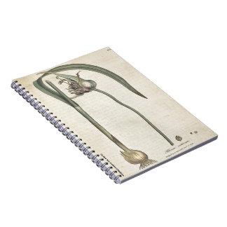 Garlic Notebooks