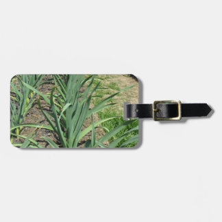 Garlic plants in rows in the garden luggage tag