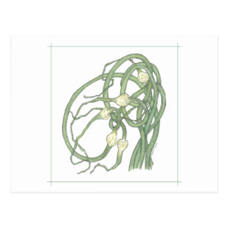 Garlic Scapes (Allium sativa) Postcard