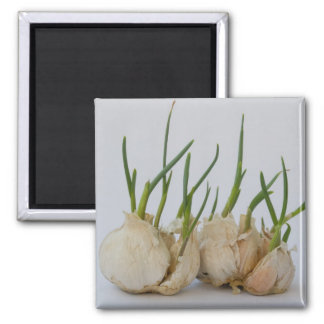 garlics magnet