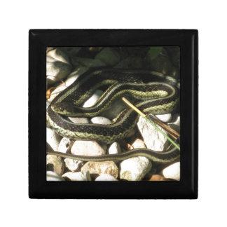 Garter Snake Gift Box