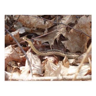 Garter Snake Postcard