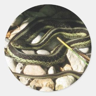 Garter Snake Round Sticker