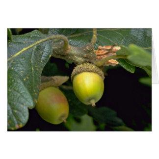Gary oak tree fruit (quercus garryana) card