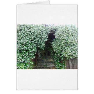 Gate Covered in Jasmine Card