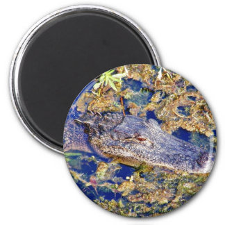 Gator Aligators Swamps Magnet