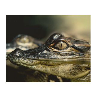 Gator in the Swamp Wood Canvas