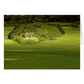 Gator Lurking in Duckweed - Nature Photograph Card