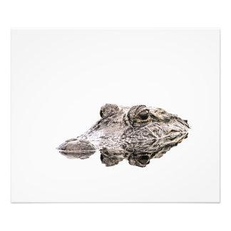 Gator Photo Print