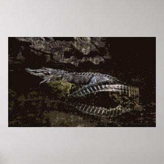 Gator Portrait Poster