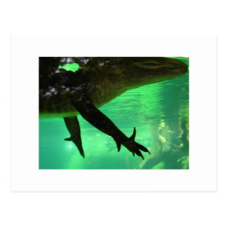 Gator Postcard