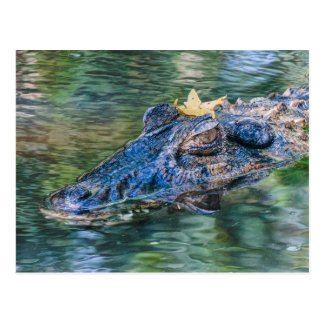 Gator with a crown postcard