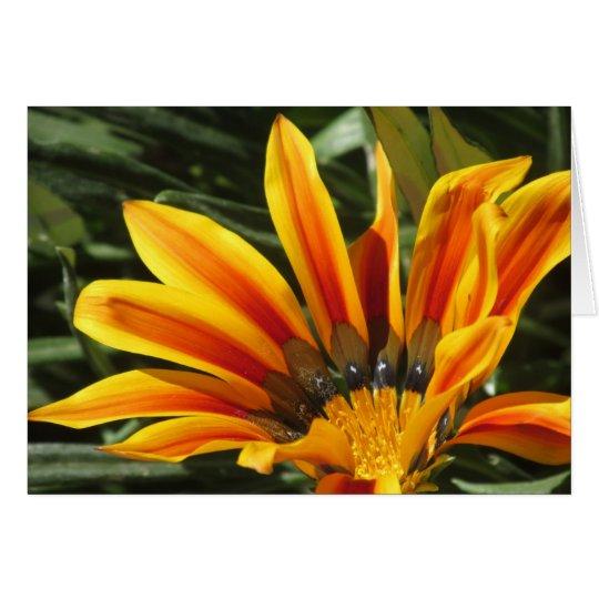 Gazania Bloom Card