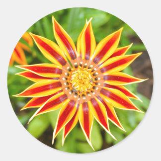 Gazania Flower Classic Round Sticker