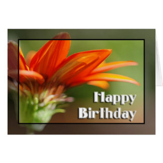Gazania Happy Birthday Card