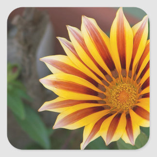 Gazania in Red, Gold and Green Square Sticker