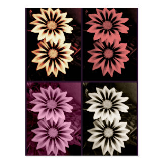 Gazania Pop Art Postcard