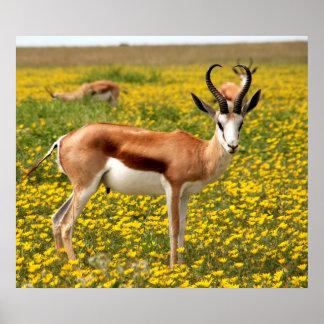 Gazelle in meadow poster