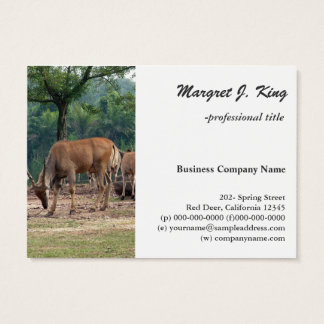Gazelle, wild animal zoo,羚. business card