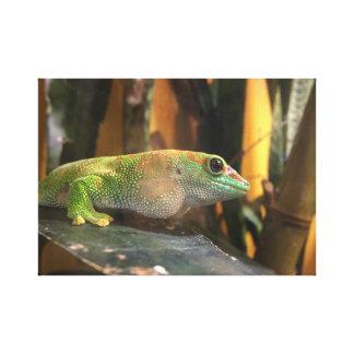 gecko canvas