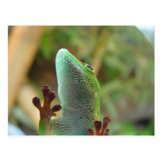 Gecko - for lovers of lizards ! postcard