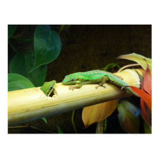 Gecko Love Postcard